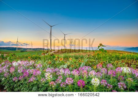 Windmills new energy with spring flower in twilight time at Khao Kho Phetchabun Thailand