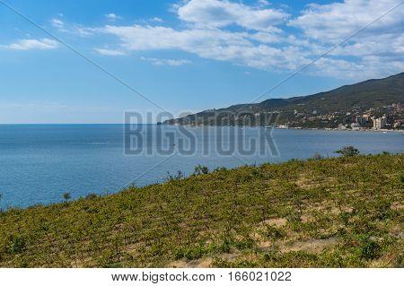The vineyards on the coast near Yalta. Crimea Russia