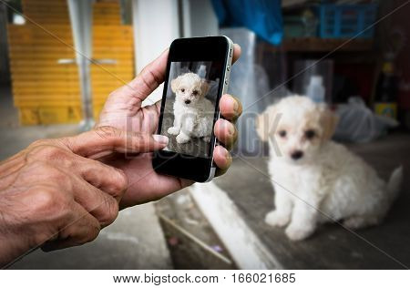 Man hand holding and using mobilecell phonesmart phone photography and a puppy on concrete floor with blurred puppy on concrete floor.