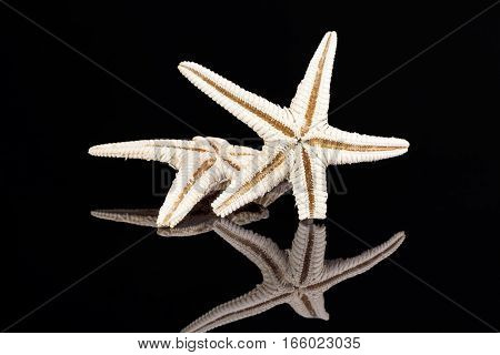 Sea stars isolated on black background reflection .