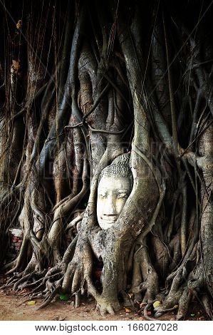 Buddha head overgrown by fig tree in Wat Mahathat. Ayutthaya historical park Thailand.