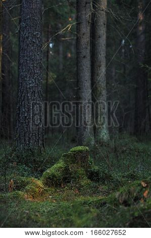 Mossy Stump.