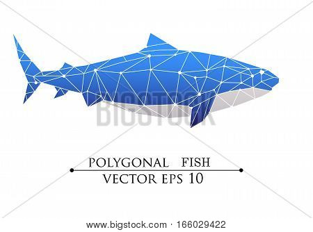 Vector Polygonal big fish, grampus, shark, whale blue with white belly. Web design page sight, poster banner, print, advertisement, element isolated. poster