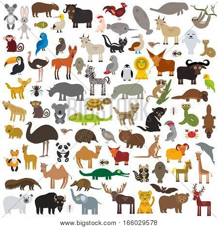 set Cartoon Animals from all over the world. Australia, North and South America, Eurasia, Africa isolated on white background. Vector illustration