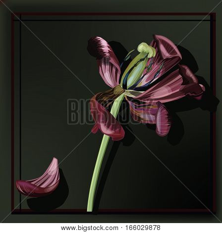 Vector Illustration of faded tulip on the dark background