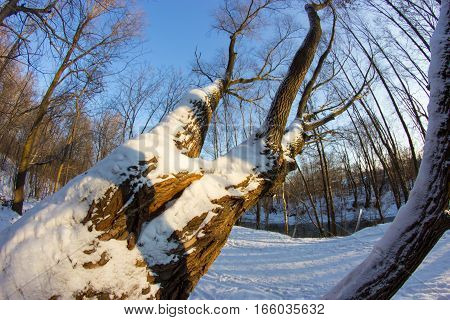 tree coverd with snow. fish eye lens