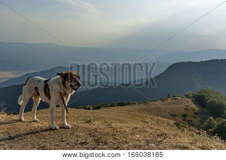 Mountain landscape and sheep-dog at Central Balkan mountain,  pass Beklemeto, Stara Planiana, Bulgaria