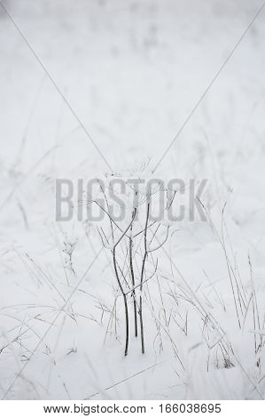 Wintery Background