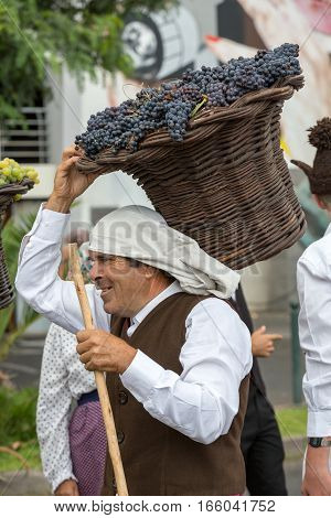 FUNCHAL MADEIRA PORTUGAL - SEPTEMBER 4 2016: Old man carry the basket of grapes in traditional costume durnig historical and ethnographic parade of Madeira Wine Festival in Funchal. Madeira Portugal