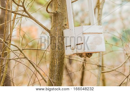 White wooden box hanging from a branch in a tree in a wooded area
