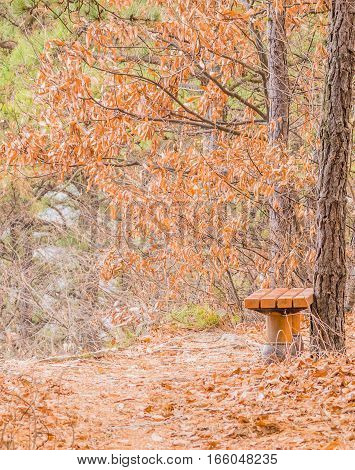Single park bench next to a walking path surrounded by trees in fall colors