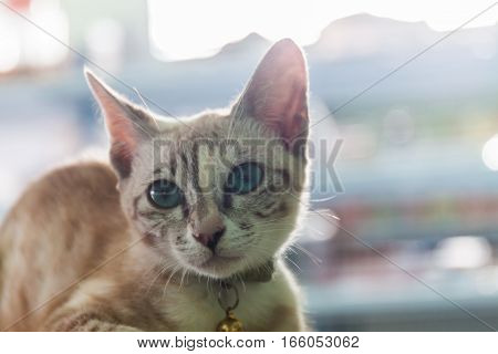 portrait of a domestic cat with sunlight background
