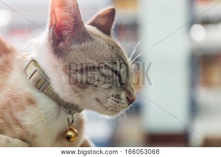 Portrait of domestic cat sleeping with blur background