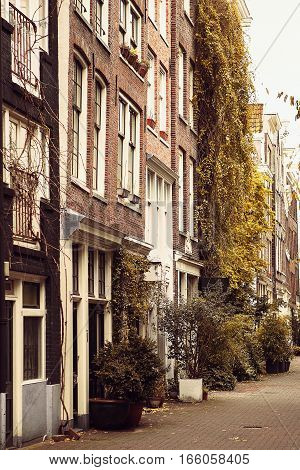 Beautiful street with houses decorated with plants in the capital of the Netherlands - Amsterdam. European-style housing.