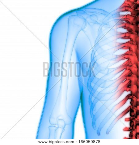 3D Illustration of Human Body Bone Joint Pains Anatomy (Spinal Cord)