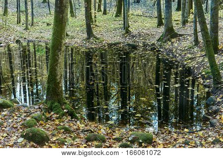 Lake In Dense Forest