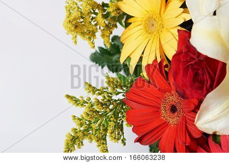 Close up colourful flowers isolated on white background