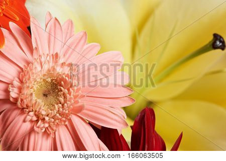 Pink flower background on yellow background closeup