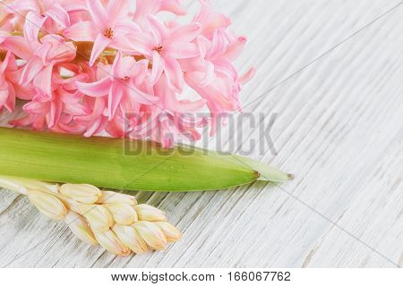 Pink hyacinth flowers on white wooden table