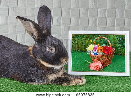 Black rabbit lies beside photo with flowers