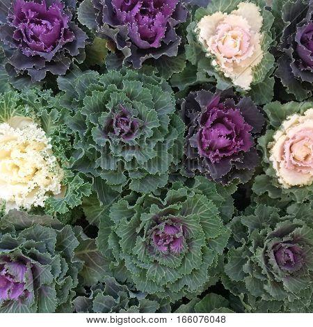 Exotic flowers arrangement. Floral composition. Decoration. Spring