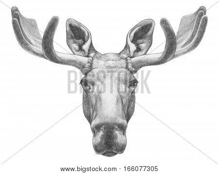 Portrait of Moose. Hand drawn illustration. Wild Animal.