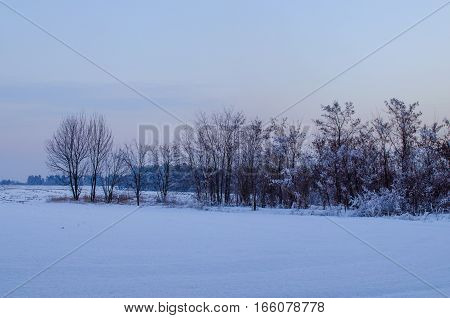winter forest in frosty and snowy weather in the evening