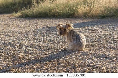 Lonely dog on a road. Doggy with sad eyes looking back, desolating image. Dog maybe asking for help. Possibly abandoned animal