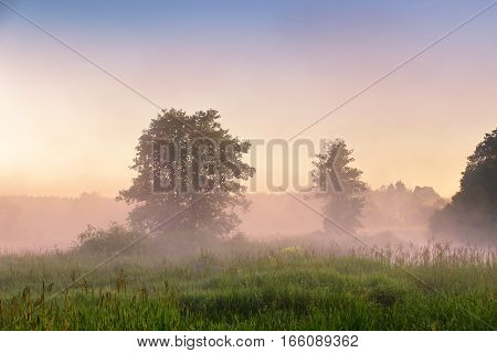 Summer Misty Dawn On The Bog. Foggy Swamp In The Morning.