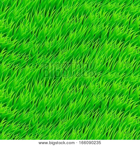 Fresh Grass Seamless. Beautiful Fresh Lawn Grass Texture. Wind Design