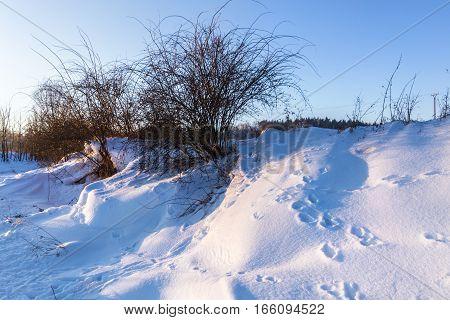 Snow drifts and rose hip shrubs. Moravian landscape Kunstat.