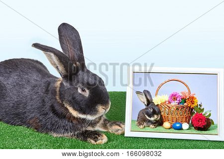Next to the photo of the rabbit and a baskets with flowers is a black rabbit