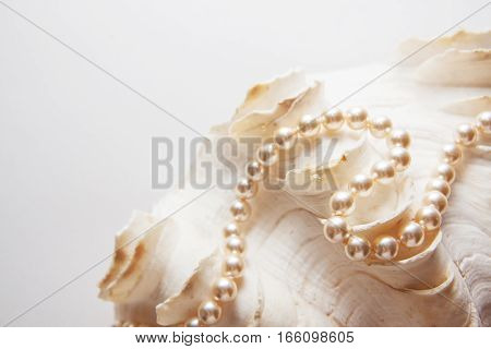 pearl shells with beads teeth health background