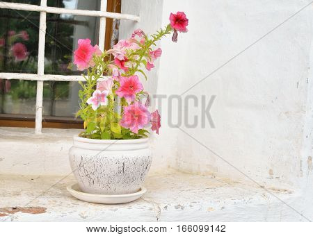 Vase with flowers on the window in Saviour Priluki Monastery near Vologda Russsia.