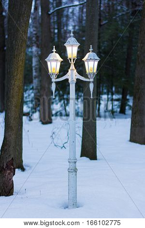Vintage Lamp Post on a Winter Night in a Forest