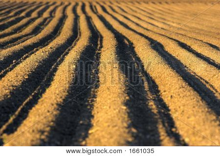 Ploughed Soil