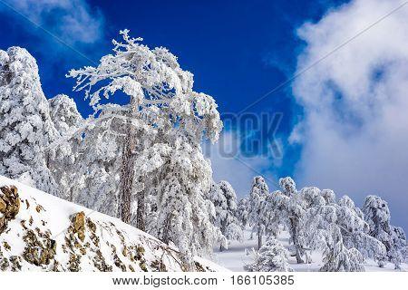 Troodos mountain in winter. Snowy landscape. Cyprus.
