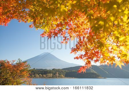 Autumn tree and Mountain Fuji at lake kawaguchiko in autumn season