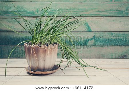 Green plant in a pot on white wooden background