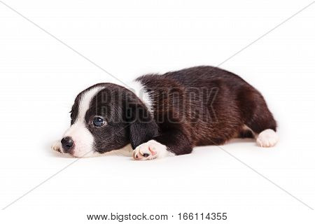 Cute puppy not purebred feels sad. Pets need our support and care.