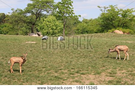 The group of deers  in the field