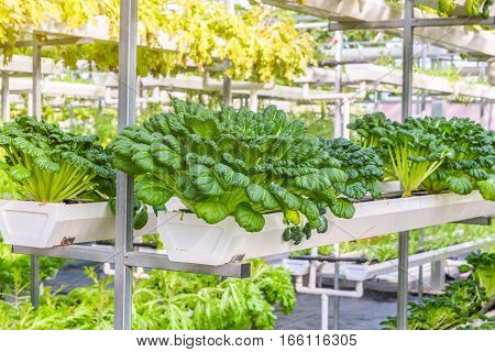 Organic vegetable in greenhouse in city of China.