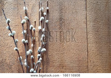 Willow branches on a wooden background. Top view