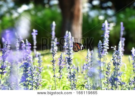 I saw a butterfly. It flew in a field of flowers garden. It's beautiful fly fast I shoot a lot of pictures. But I like the picture This leaves most.