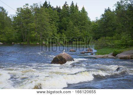 In the shallows of the river Kymiyoki. Langinkoski, Finland