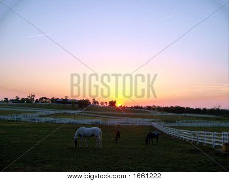A Bluegrass Sunset
