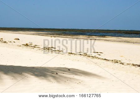 Shadow of a palm tree with background in the sea at Mombasa in Kenya