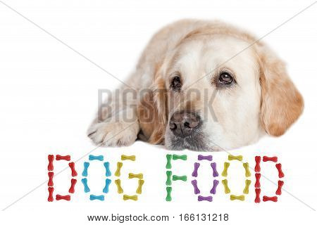 Closeup view of the Golden Retriever Dog lying on the white background. The inscription DOG FOOD made from colored dog bones is in front of the dog in bottom of the photo.