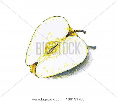 Yellow apple fruit are isolated on a white background. Color sketch felt-tip pens. Healthy food. Handwork. Fast schematic drawing