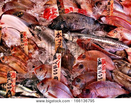 Exotic Fish On Market Counter